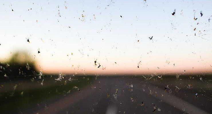 Как защитить лобовое стекло от насекомых